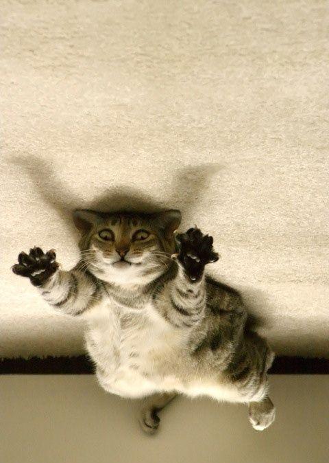 Смешные картинки котов без надписей, день