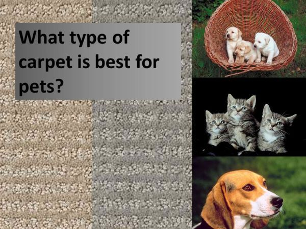 What type of carpet is best for pets