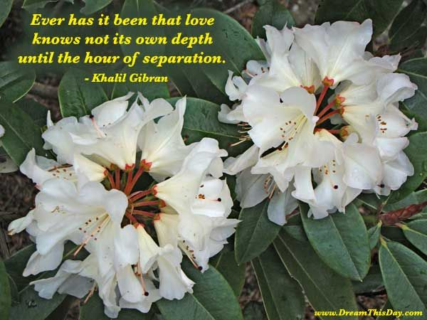 Ever has it been that love knows not its own depth until the hour of separation.  - Khalil Gibran