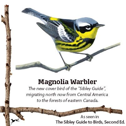 sibley guide to birds second edition second printing