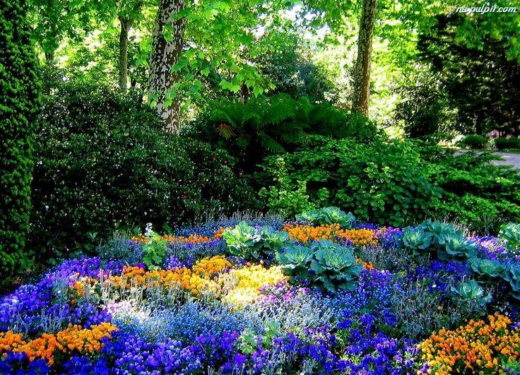 Krzewy, Kwiaty, Ogród, Drzewa