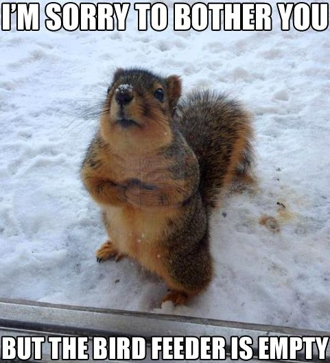 Some people search for squirrel-proof birdfeeders, which I think is a fool's errand. Other people say: just feed the squirrels!