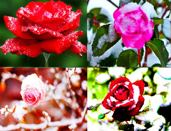 Germany Snow Beautiful Flowers Pretty Deutsch Human Eye Let It Find This Pin And More On All Flower In The World