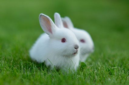 What Is Your Spirit Animal? You got: The Rabbit The Rabbit is a symbol of balance in nature. It is never far from its home, always making time to take care of its family. Like the Rabbit, you seek the peace of love above all. You are blessed with the wisdom to know what life is truly about.