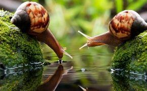 Due lumache in acqua potabile, riflessione, onde, corna, verdi