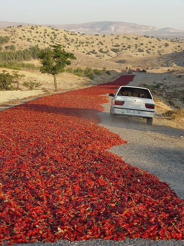 Eastern Anatolia, the road with a river of red peppers all laid out to sun dry.