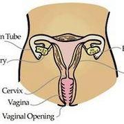 Effects of Low Testosterone in Women | eHow