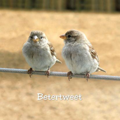Hippe beterschaps-tweet met musjes, sparrows are twittering you to get well soon! Change text and send this card from Kaartje2go - creagaat dieren