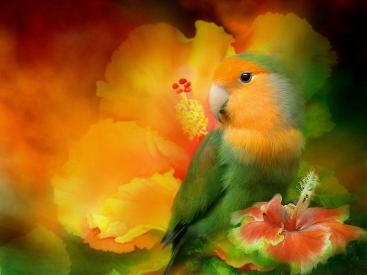 Parrots - Pictures on your Mobile: http://wallpapic.com/animals/parrots/wallpaper-32776