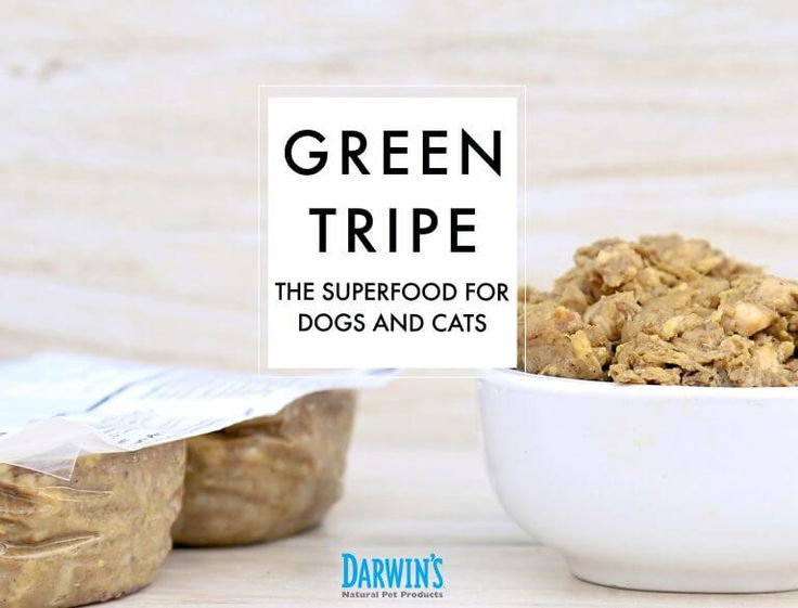 Green Tripe the Superfood