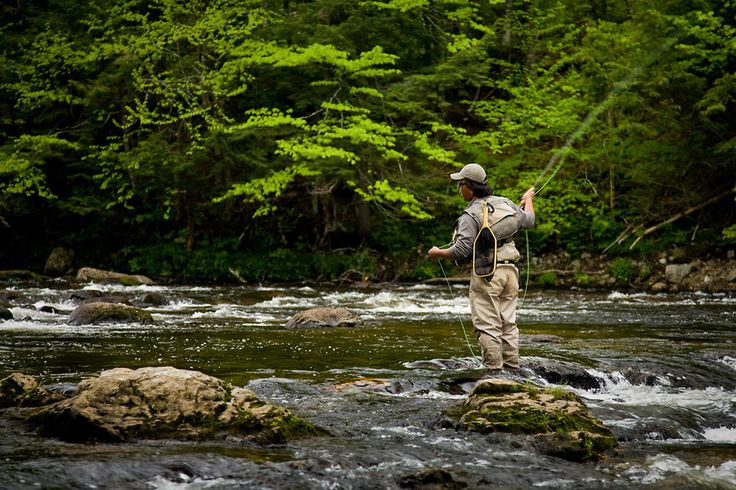 33 best images about adirondack fly fishing on pinterest for New york fishing