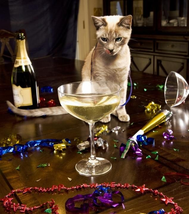 A unique wine created especially for cats. Heck, they don't want to share anyway & I certainly don't want to share mine! :-)