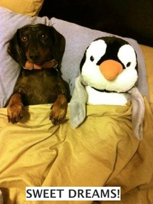 . Goodnight little daschund and penguin