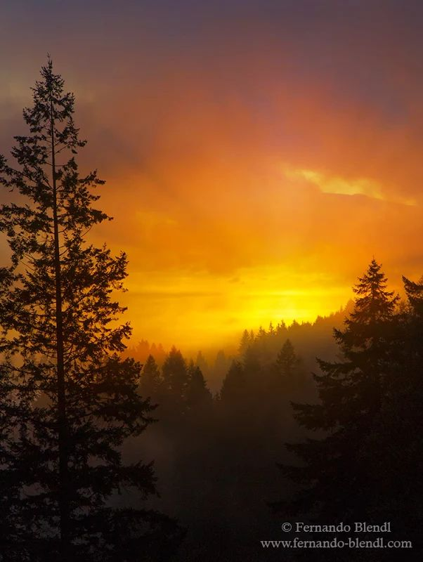 Photo: Sunrise in the British Columbia, Canada forest. New Year, new light, time…