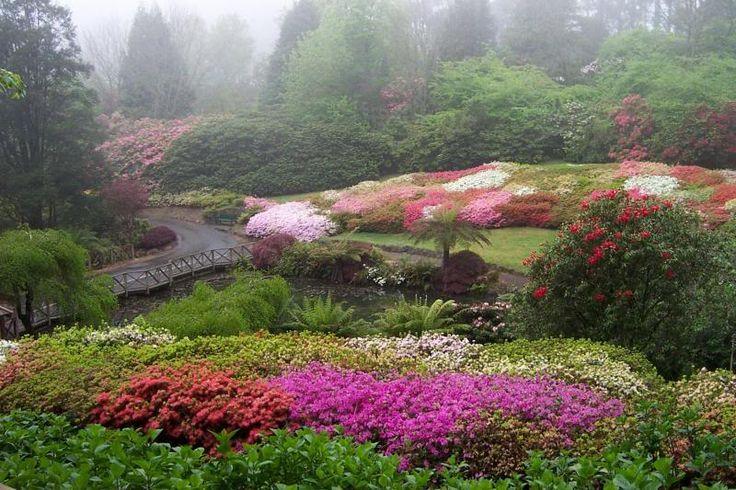 National Rhododendron Gardens in spring :: Dandenong Ranges, Victoria, Australia