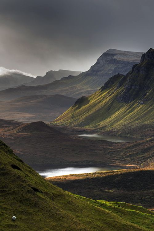 A poor lonesome sheep in Quiraing (Scotland) by Pascal Bobillon