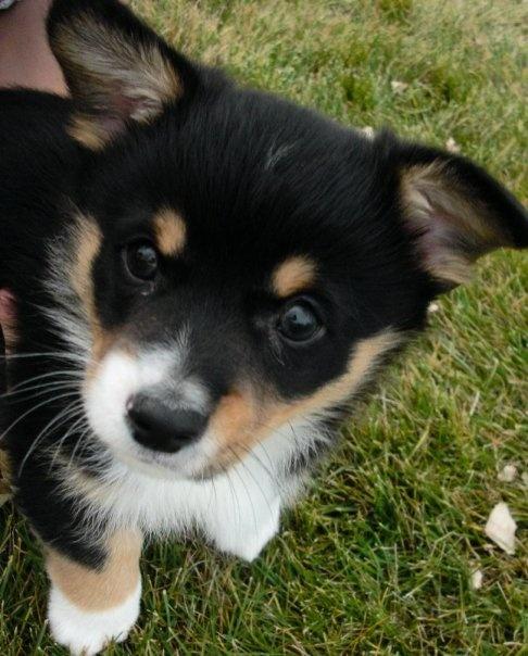 My puppy (: