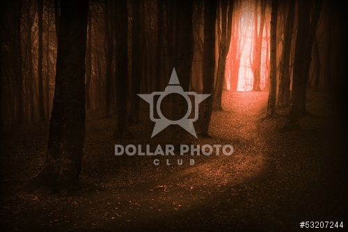 http://www.dollarphotoclub.com/stock-photo/Dark, fairytale trails in the forest in an autumn foggy day/53207244 Dollar Photo Club millions of stock images for $1 each
