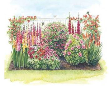 Hummingbird Garden Plan;    If you love hummingbirds, this planned garden of vividly colorful perennials will attract lots of hummingbirds to your garden. The plant height varies, and there is even 2 hummingbird vines that bloom from summer through fall. The flower show starts in the spring with the the oriental poppies, and ends in fall with the Torch Lilies. These plants are for full sun and they need a well drained soil to grow well. Zones 4-9.