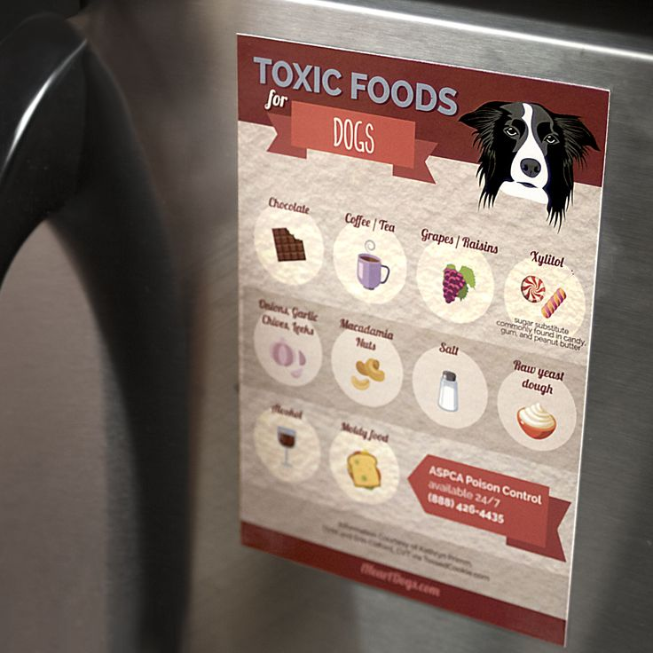 We all love to share everything with our dogs, including food. But, there are some foods that are surprisingly toxic for your dog! This informative magnetic guide tells you common household foods that are unhealthy for your dog. Keep it …