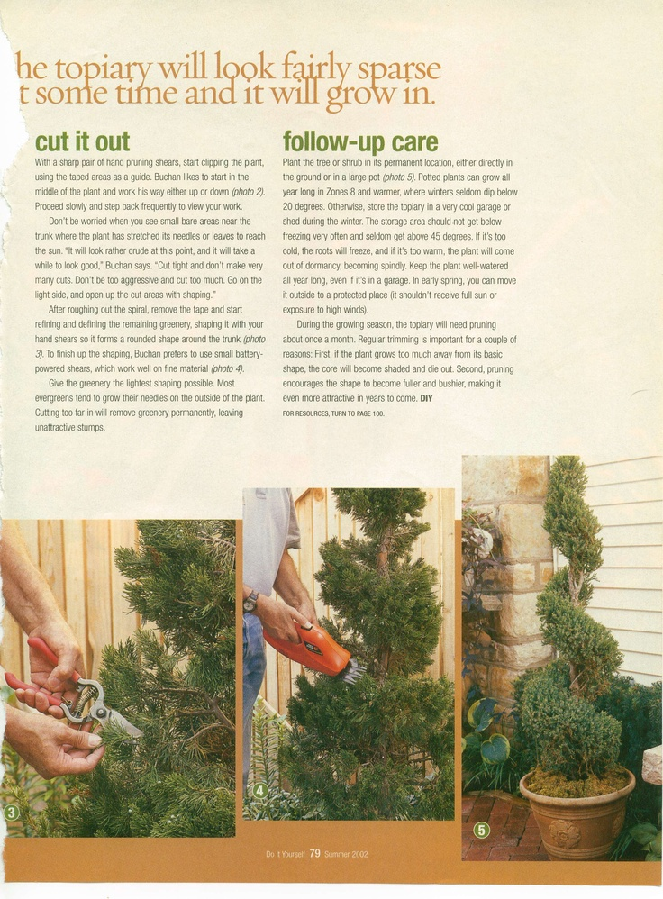 Trim a spiral topiary