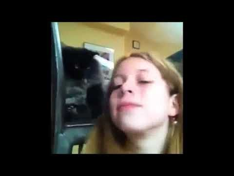 Video Top Funny Animals Video Clips (Funny Cats And Dogs)