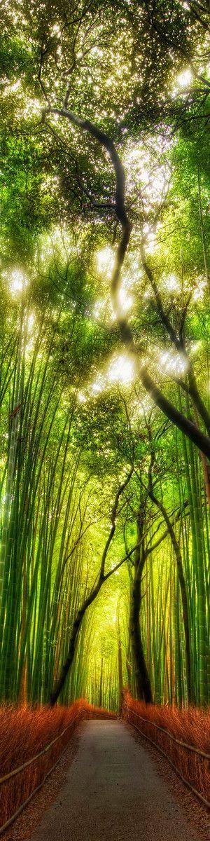 The way of a bamboo, Arashiyama, Kyoto, Japan