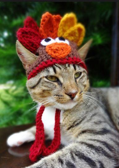 Thanksgiving kitty