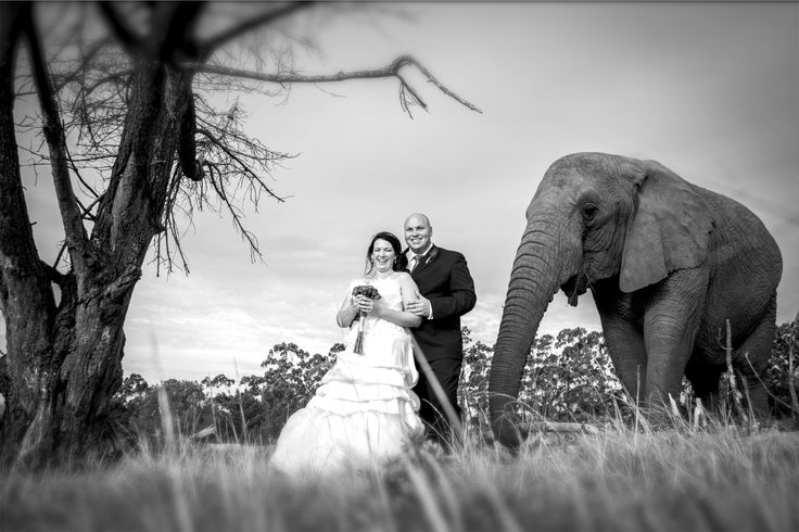 Wedding Knysna Elephant Park