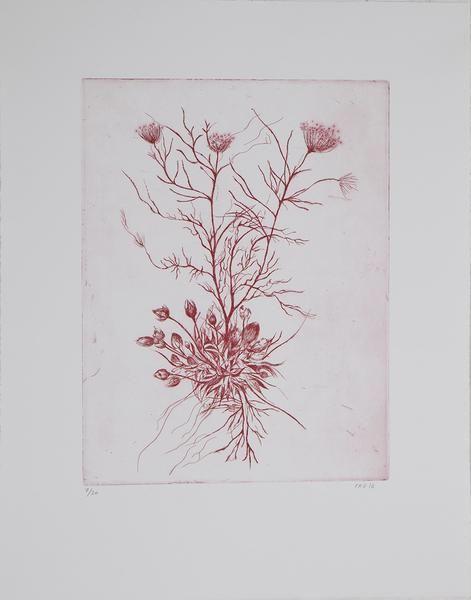 Cathrine Raben Davidsen      Format 38 x 48 cm, Oplag 20      Kobbertryk
