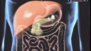 sistema digestivo - YouTube