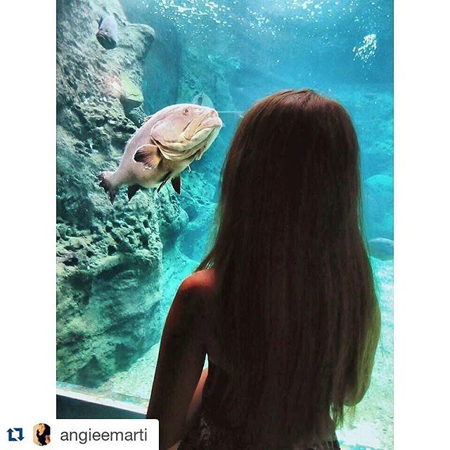 @Cretaquarium @Crete @CreteRegion @myhersonissos #Greeksummer @VisitGreecegr @DiscoverGRcom #lovingreece #lp #menoumellada  #creteaquarium @visitgreecegr @heraklion_info_point @myhersonissos  #lovingreece #aquarium#sea #marine #underwater #marinelife #research