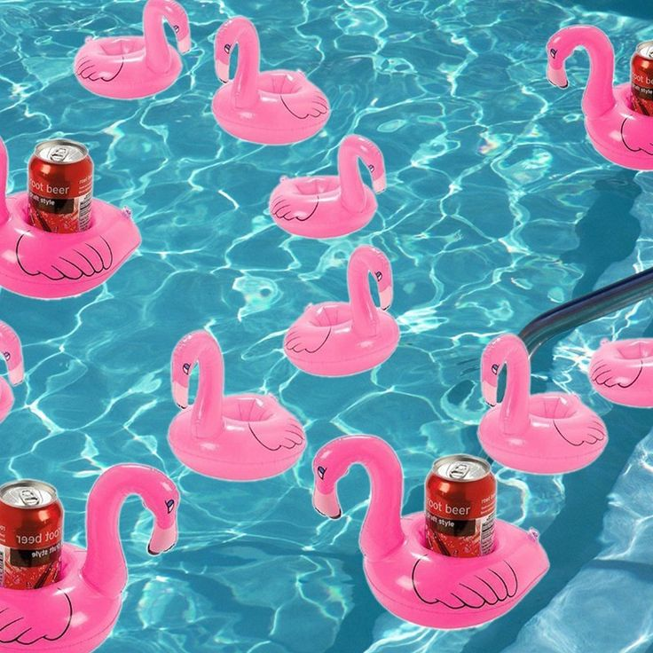 #flamingo #swimingpool