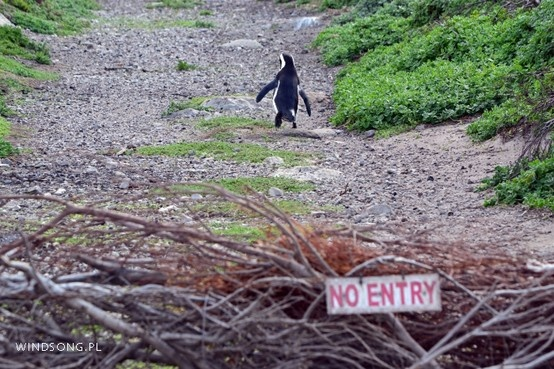 Penguin Outlaw :)