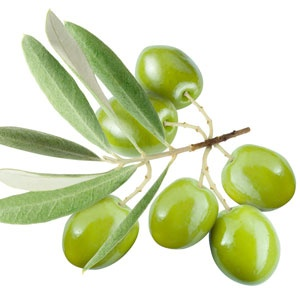 Squalane - This lightweight emollient (skin softener) is made from olive oil, although Squalane is also found in sebum (skin's own natural source of oil). It's moisturizing, restoring, and keeps skin sated.