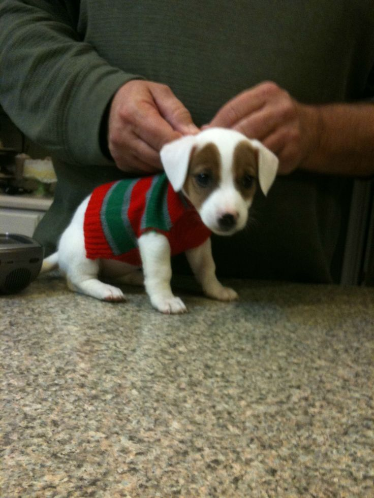 7 Adorably Festive Dogs In Christmas Sweaters