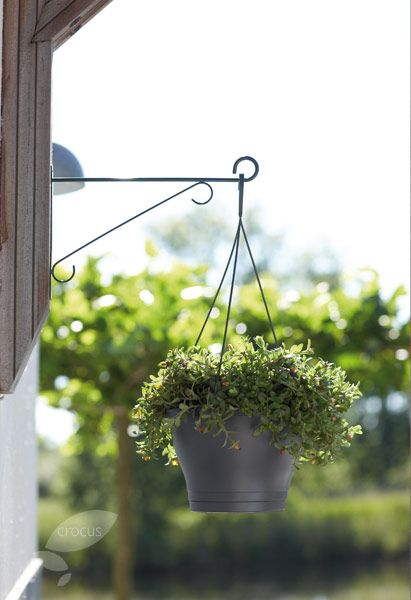 Buy hanging basket bracket: Delivery by Waitrose Garden in association with Crocus