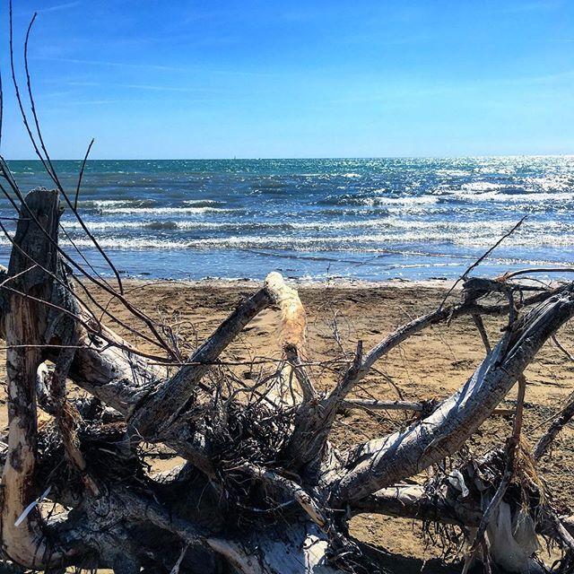 Alberi al mare... #adhocband #enjoy #live #music #rock #passeggiata #mare
