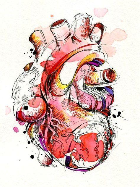 anatomia humana acuarela - Buscar con Google