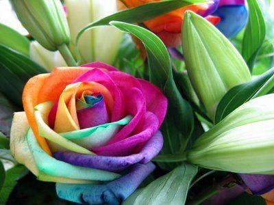 las rosa mas lindas del salvador | LA FLOR MÁS IMPORTANTE DEL MUNDO | LA TRASTIENDA DEL MERCADER