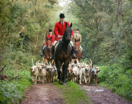 """I would love to do this, provided the """"fox"""" is just a scent trail and there's no killing at the end."""