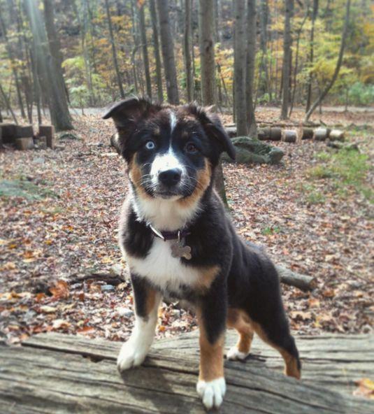Can I go play now? - Krepps Dog Park - Morgantown, WV - Angus Off-Leash #dogs #puppies #cutedogs #dogparks #morgantown #westvirginia #angusoffleash