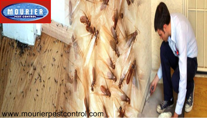 "Call @ 9999787571. Mourier pest control offers outstanding and specific ""termite control"" service to save your property from termites with instant effect. We save your households and commodities with full guarantee. We proffer affordable price ranges. Check the pest activities inside your home now."