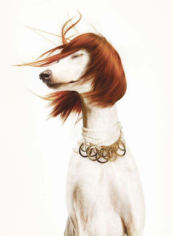 75 mejores imágenes de Canidae en Pinterest | Perros, Derechos de ...