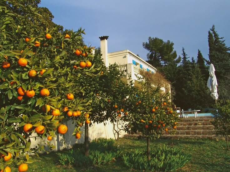 It's February. Time to harvest the oranges