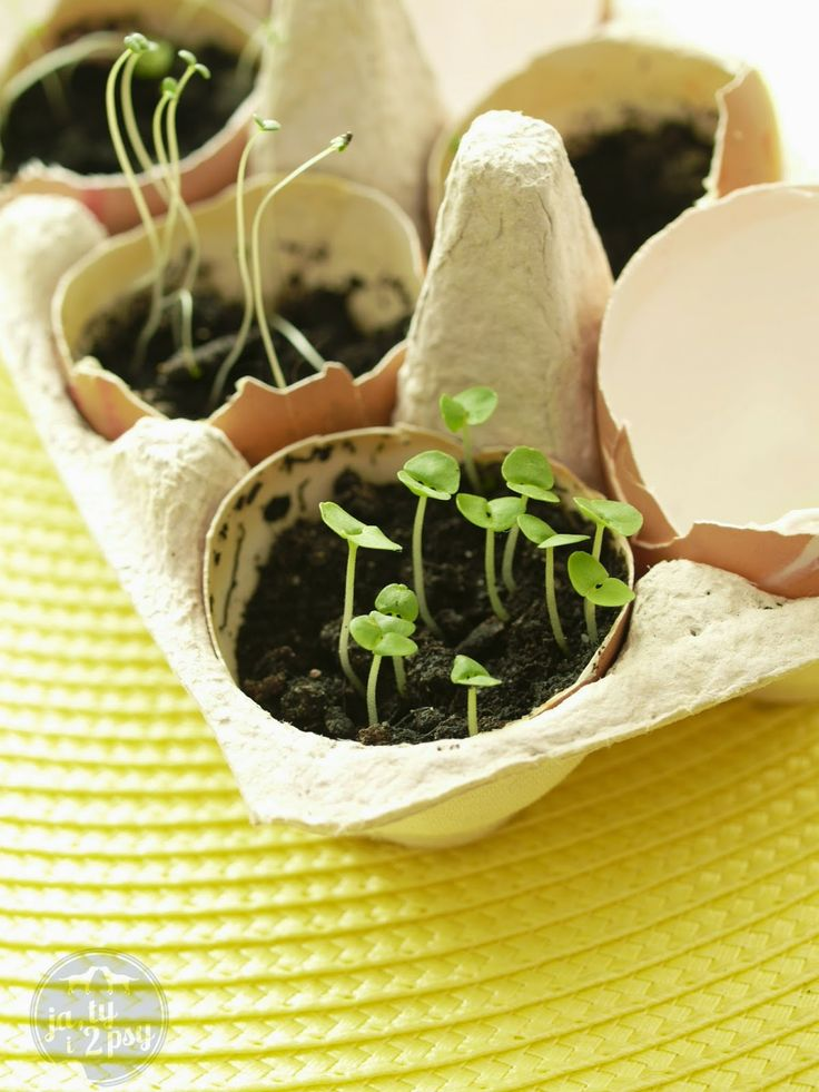 planting herbs at home