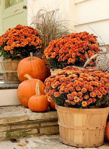 Mums and pumpkins are great for simple and easy fall decorating.: