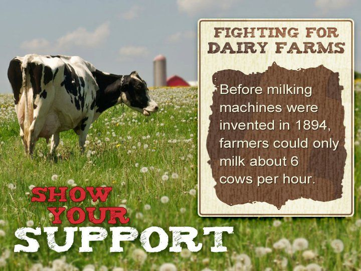17 Best images about Milk Facts on Pinterest | Health, Protein and ...