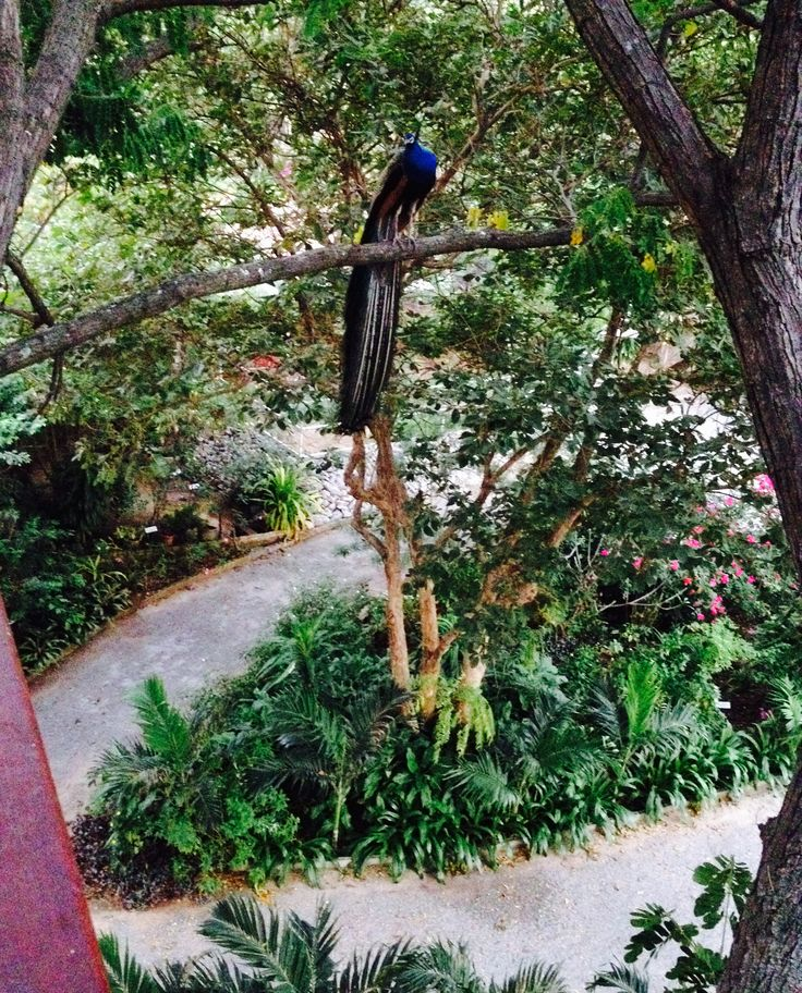View from inside the treehouse, with peacock