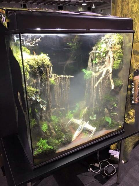 Saw this awesome Dagobah System themes frog terrarium! - 9GAG